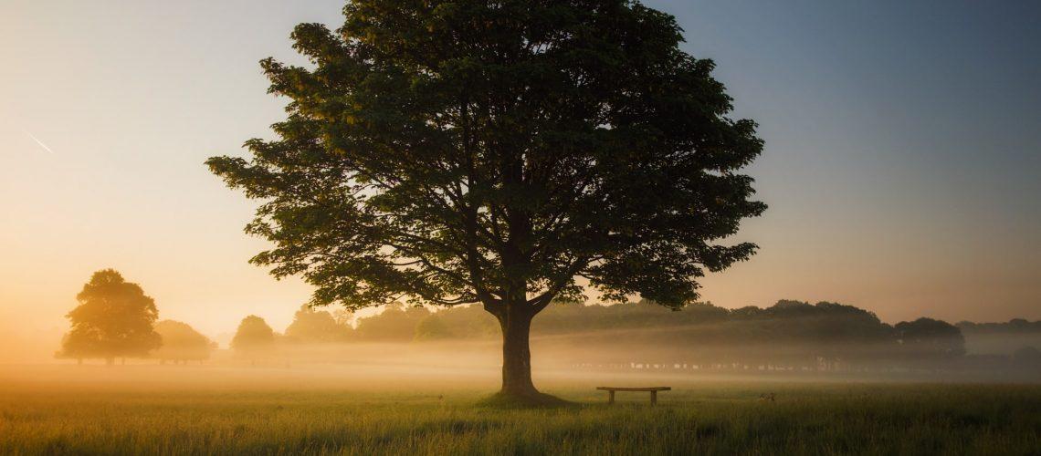 Photo of an Oak Tree